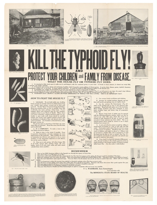 Kill The Typhoid Fly!