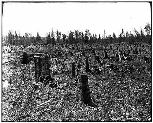 Cutover Land
